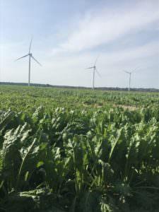ロラン島 風車