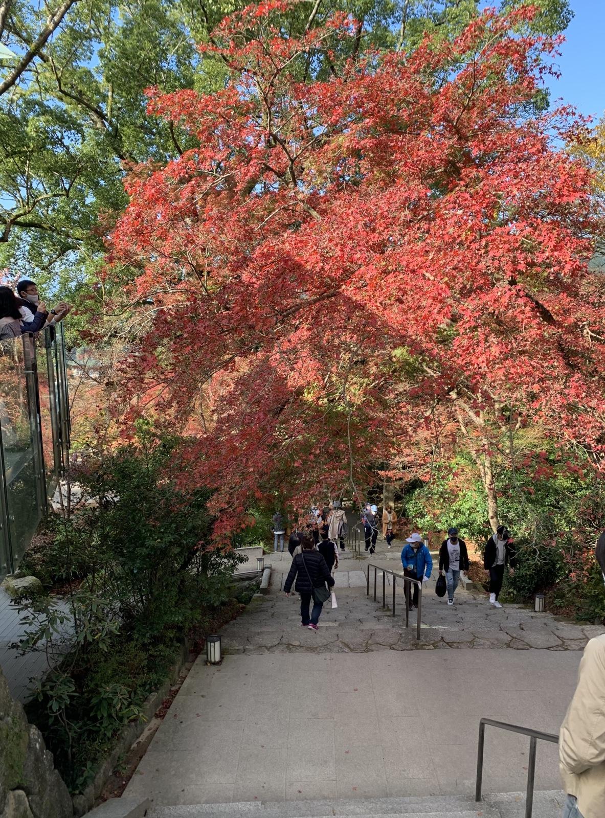 階段を降りると美しい紅葉