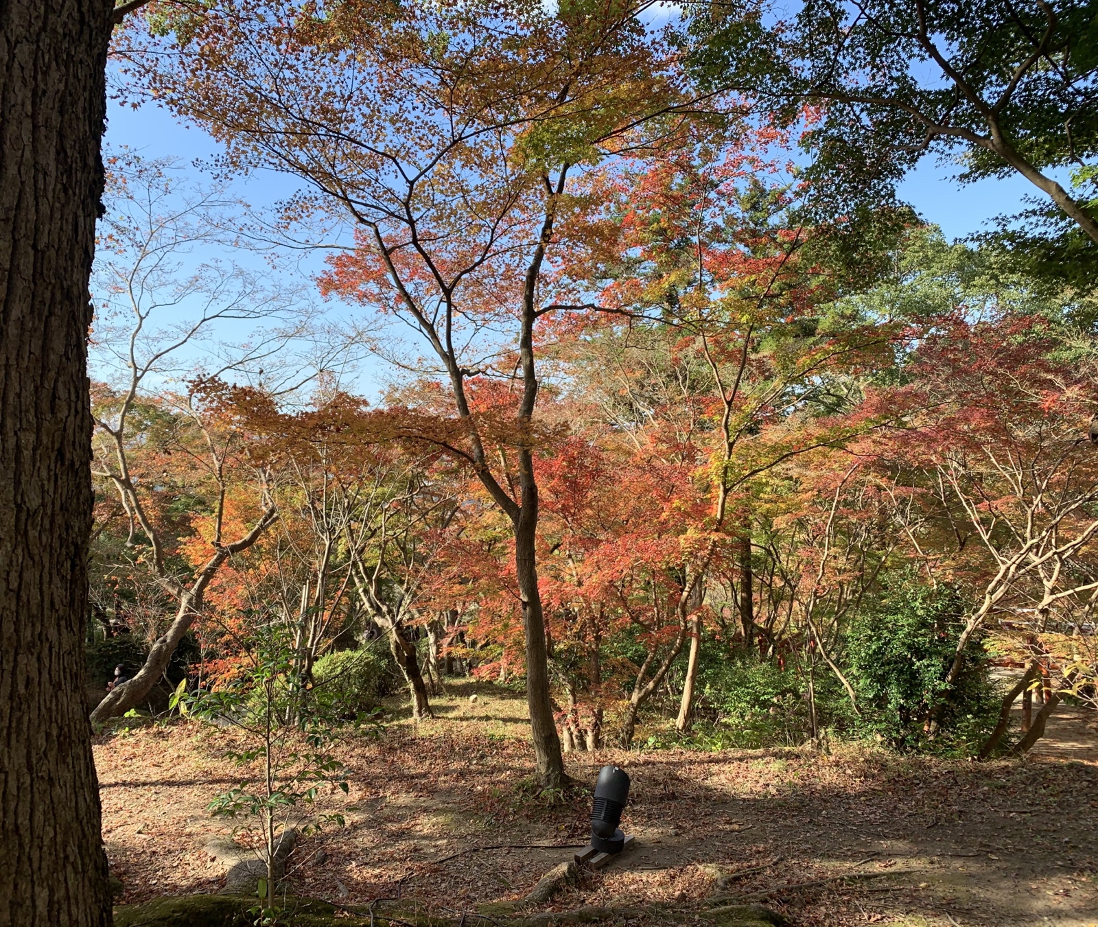 紅葉の木々が映えます