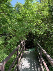 浮島の森 新宮 熊野古道 観光スポット